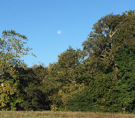 moon in daylight over some trees